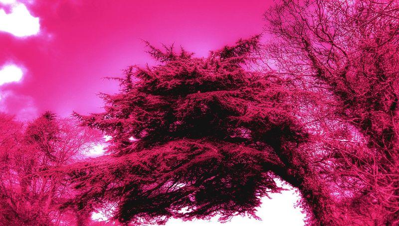 I think it looks like a Dragon ...cool tree
