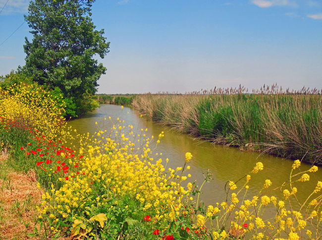 Beauty In Nature Channel Clear Sky Flower France Growth Horizon Over Water Landscape Nature Papaver Plant Poppy Poppy Flowers Red Flower Riverscape Scenics Sky Tranquil Scene Travel Destinations Traveling Travelling Tree Water Yellow Flower