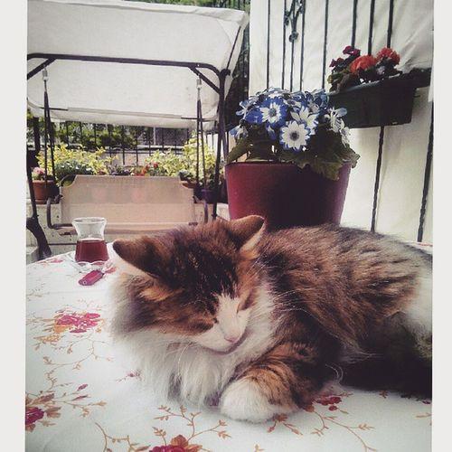 Güzellikuykusu 👯💕🐈 Uyuyangüzel Kedi Huzur Dolcefarniente  Cat Beautysleep Nofilter Eyesofmoon