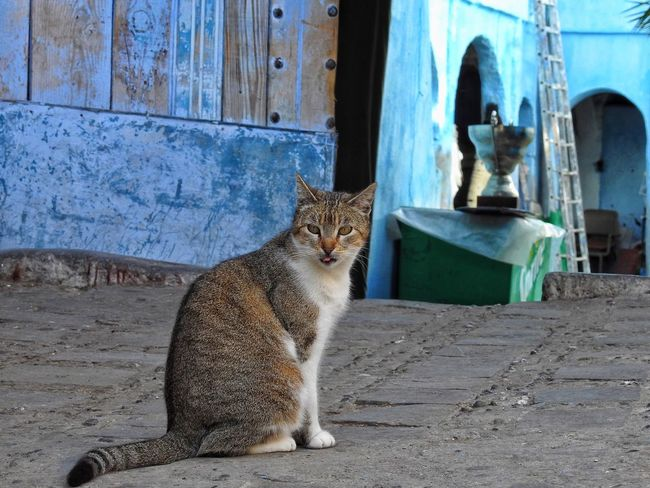 Cat Kitten Tounge Out  Colorful Morocco Streetphotography Kitty Cat Kitty Love
