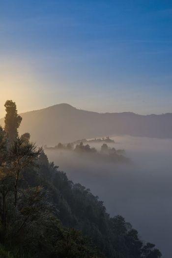 Foggy frenzy Nature Mountain Range Hazy  Fog Mountain Beauty In Nature Landscape Tree Tranquility Morning Foggy Morning Bromo INDONESIA