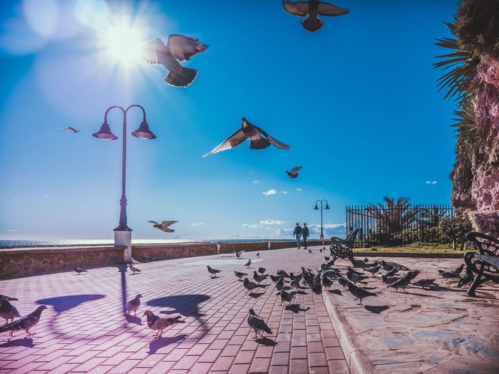 View of seagulls against blue sky