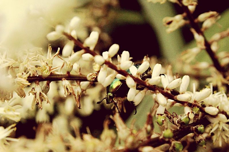 Scarabé Beetle Beetles Nature Nature_collection Nature Photography Green Fleurs Flowers Flower