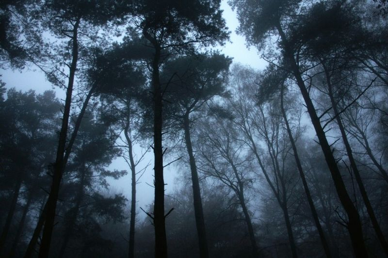 Germania Woods Fog_collection
