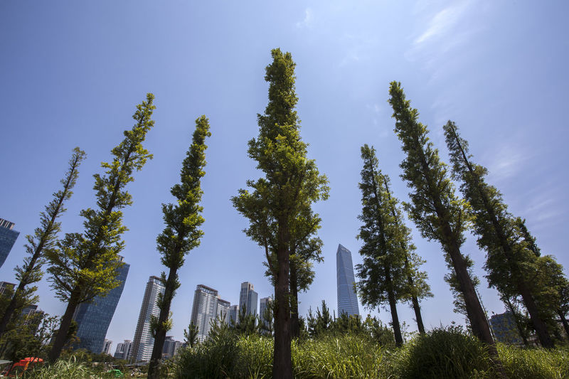 Low Angle View Of Tall Trees At Songdo Central Park Against Sky