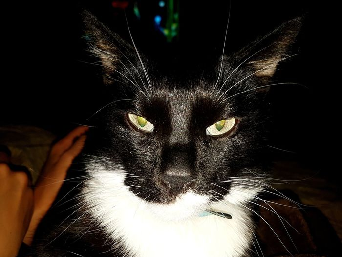 Pets Indoors  Domestic Cat One Animal Portrait Animal Themes Close-up Spraying Black Background Adult Domestic Animals One Person Day Leopard Mammal Mysoulreflection Mythoughts Mylife Mypain Mytlp моимысли мояжизнь мояболь моимжб People