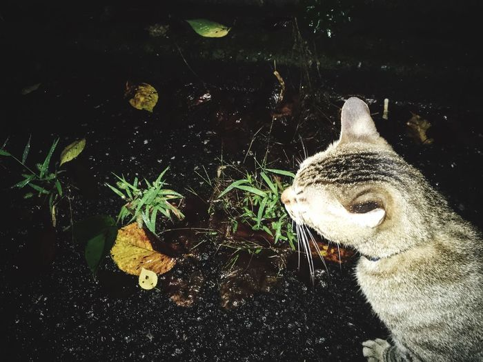 Cat Midnight Rain Weed Fallen Leaves