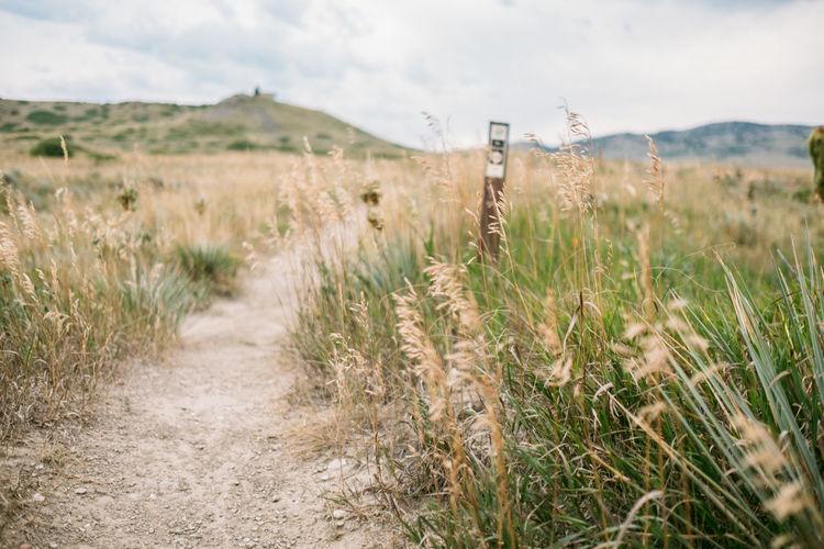 Land Field