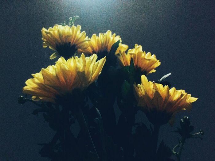 Có tý giả film.PhonePhotography Chrysanthemum Yellow EyeEmFlower Flowerlover Flowers Daylight Eyeemgood Grainy Hoa Mobilephotography