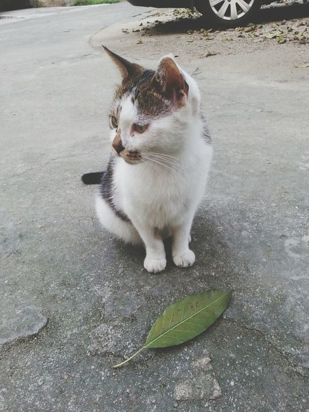 I Love Cats Cat Relaxing Enjoy Life _(:_」∠)_不理我。。。