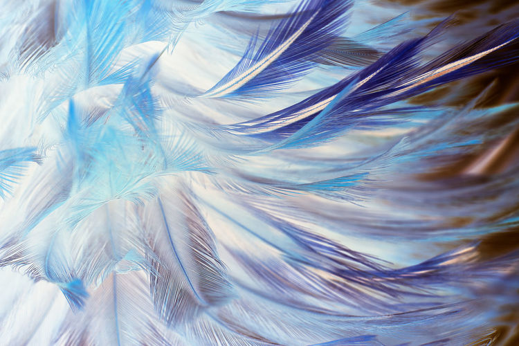 Abstract Abstract Backgrounds Backgrounds Blue Close-up Complexity Day Feather  Fragility Full Frame Indoors  Lightweight Motion Nature No People Pattern Softness Textured  Textured Effect Vulnerability  Water