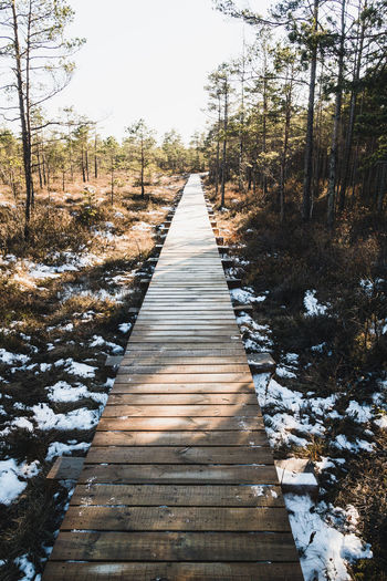 Wooden boardwalk leading towards trees in forest during winter