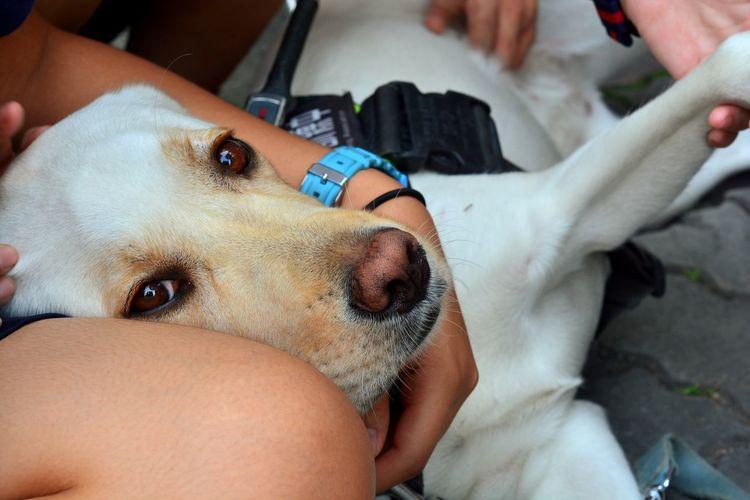 A guide dog~ Dog Dogs Guidedog Puppy Nikon D7100 Nikonphotography