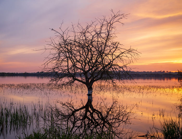 Bare tree by lake against sky during sunset