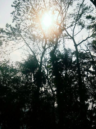 Tree Nature Sun Sky Beauty In Nature Day No People Sunlight