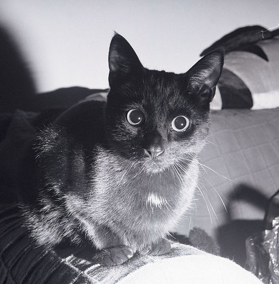 elmo First Eyeem Photo Film Ilford Xp2 400 Olympus Om-2n Flash Photography Black Cat Cat Pussycat Feline Animal Themes Looking At Camera