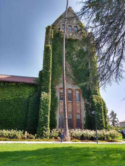 Architecture Building Exterior Built Structure Day Grass Green Color Lawn Nature No People Outdoors SJSU Sky Tree Yard