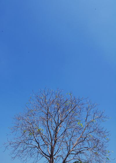Sky Nature Tree Clear Sky Blue View