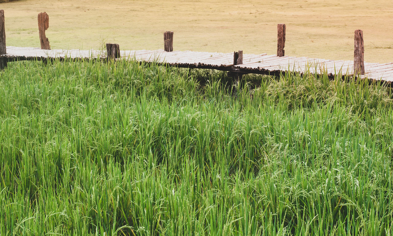 plant, grass, green color, land, no people, growth, field, day, nature, wood - material, barrier, beauty in nature, boundary, fence, tranquility, outdoors, scenics - nature, landscape, tranquil scene, post, wooden post