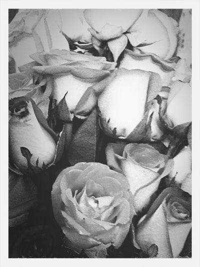#rose #flower #nature #blackandwhite