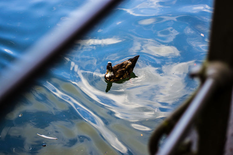 High Angle View Of Duck Swimming On Lake Seen Through Railing