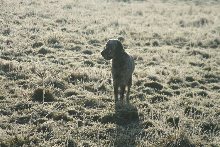 Dog on grassy field during sunny day