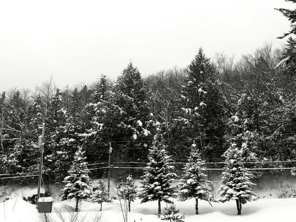 Outdoors Beauty In Nature Winter New England  New Hampshire, USA White Mountain National Forest North Woodstock, Nh Seasons Colletion Snow Trees Landscape Landscape_Collection Black & White Snowstorm2017 Day NH Beauty In Nature February Snow
