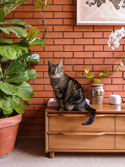 Cat sitting on potted plant against wall