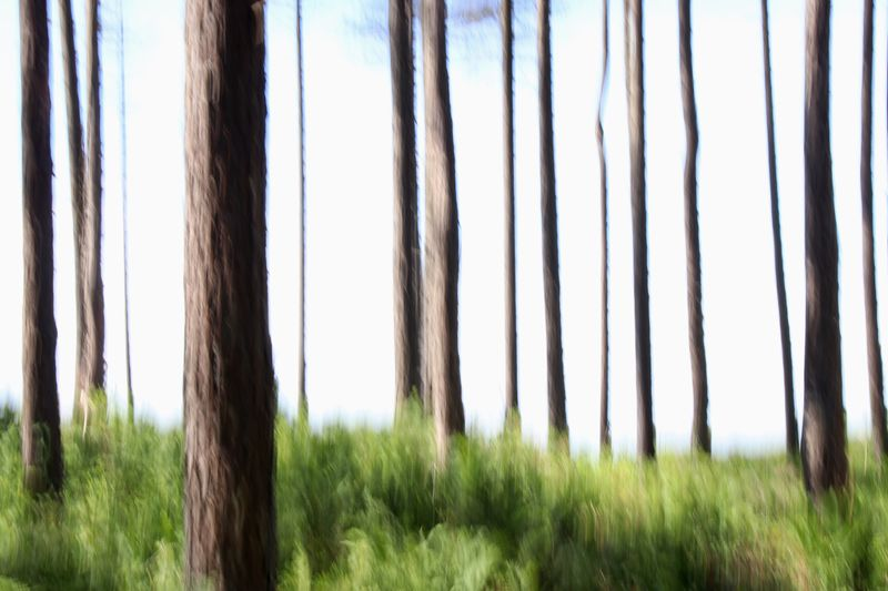 Forest, abstract WoodLand Landscape Lines Linear Abstract Intentional Camera Movement Blur Longexposure Shutterdrag Nature Tree Trunk Tree No People Tranquility Grass Day Growth Outdoors Sky Beauty In Nature Tranquil Scene Scenics Low Angle View Landscape Forest