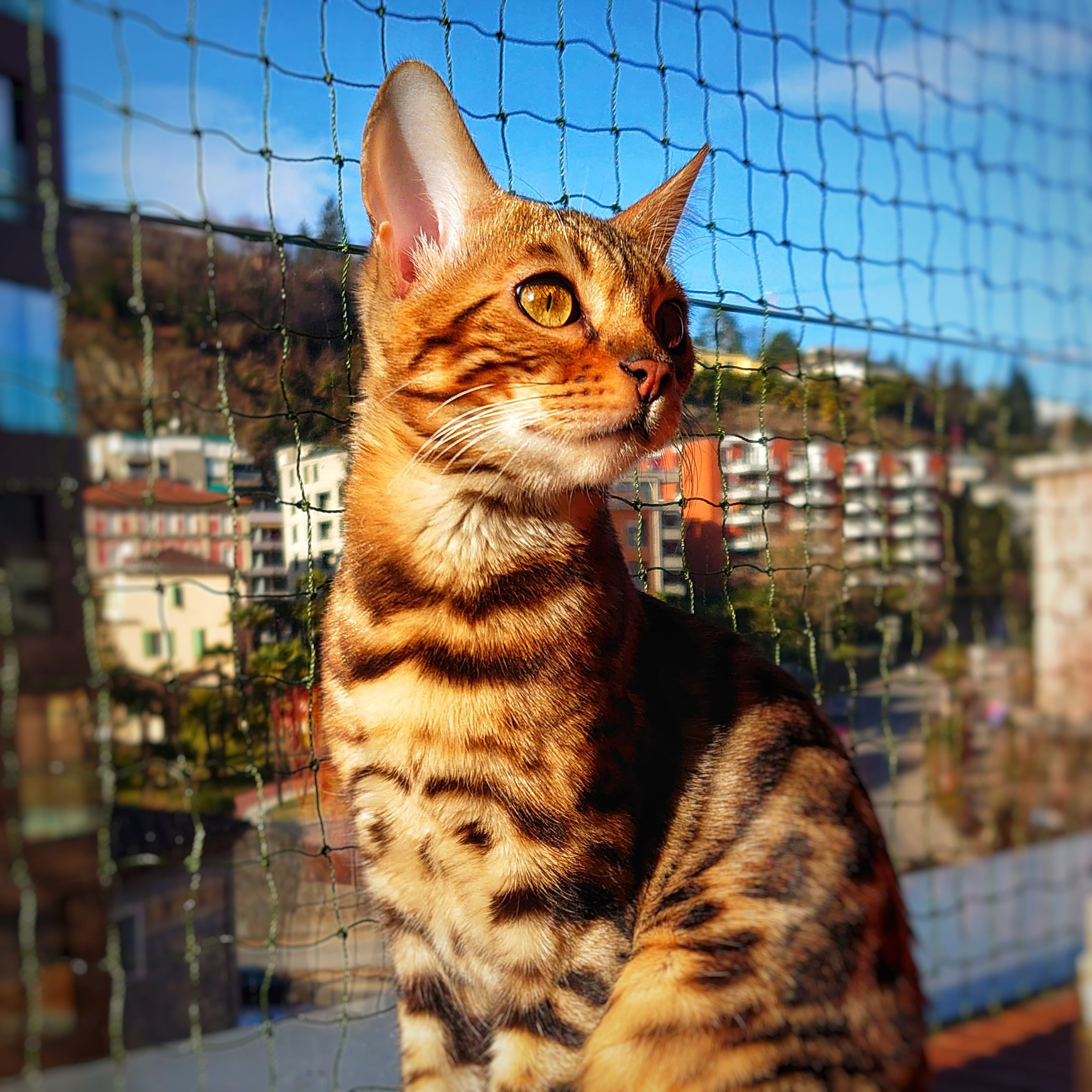 cat, animal, pet, animal themes, mammal, one animal, feline, domestic animals, domestic cat, tabby cat, whiskers, small to medium-sized cats, felidae, no people, looking, carnivore, day, fence, focus on foreground, looking away, close-up, nature, portrait
