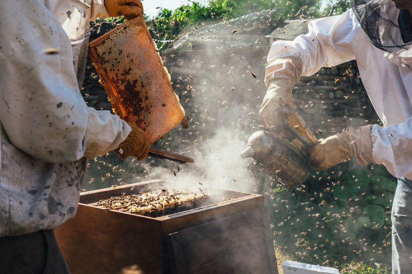 The Week On EyeEm Nest Occupation Hive Apiary Pollen Beehive Honey Bee Agriculture Beekeeping Beekeeper Extraction Production Bees Keeping Honey Real People Honey Production Honeycomb Food Bees Insect Organic Beeswax Smoker Healthy