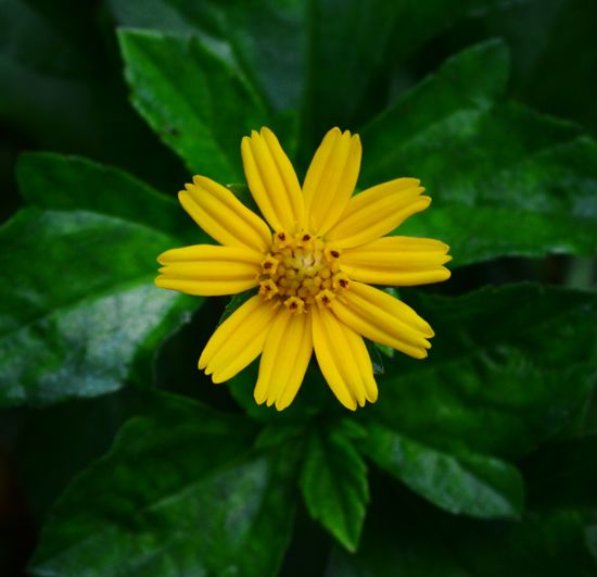 Flower Flower Head Yellow Nature Plant Close-up Green Color Outdoors