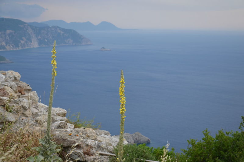 Nature Nature Photography Beauty In Nature Corfu Flower Greece Idyllic Mountain Mountain Range Nature Non-urban Scene Plant Rock Rock - Object Scenics - Nature Seascape Solid Tranquil Scene Water ЯПГреция