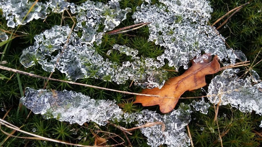 High angle view of frozen grass during winter