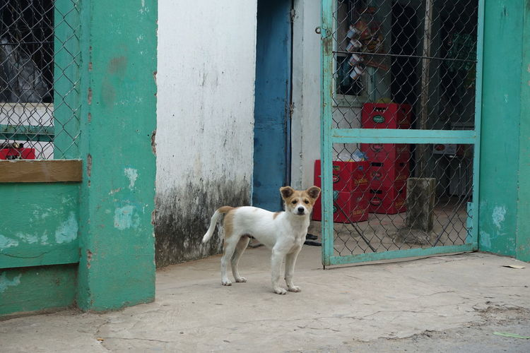 Stray Dog Standing At Gate