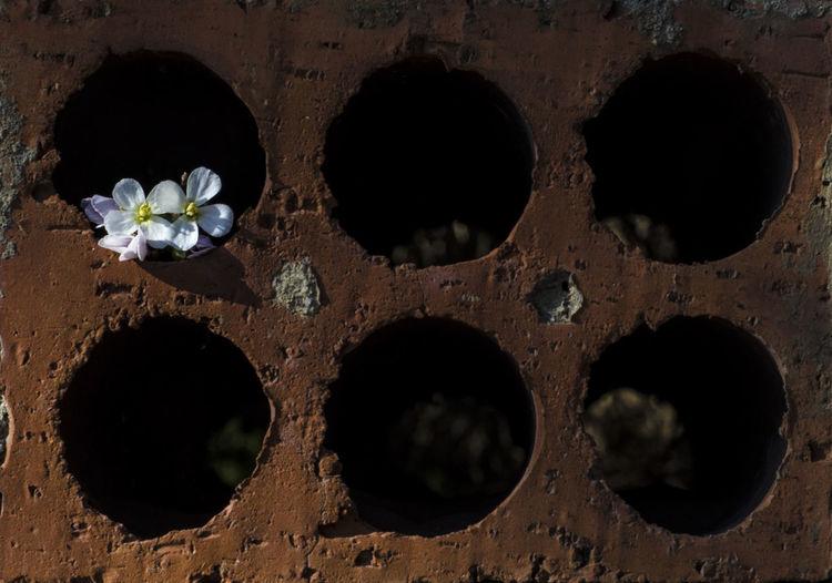 Close-up of flowers window