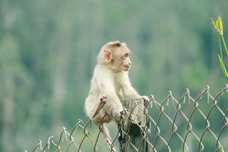Baby monkey sitting by fence