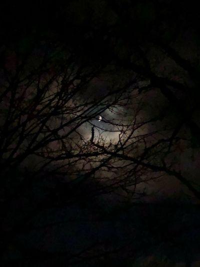Tree Dark Moonlight Sky No People Outdoors Cloud Walburg