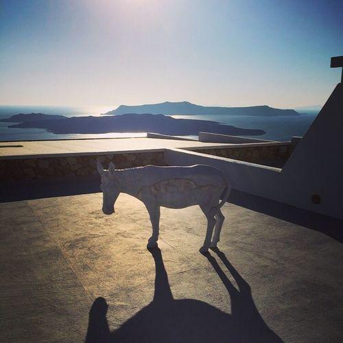 Caldera Santorini Donkey Sunshine Sea View Paradise Shadow