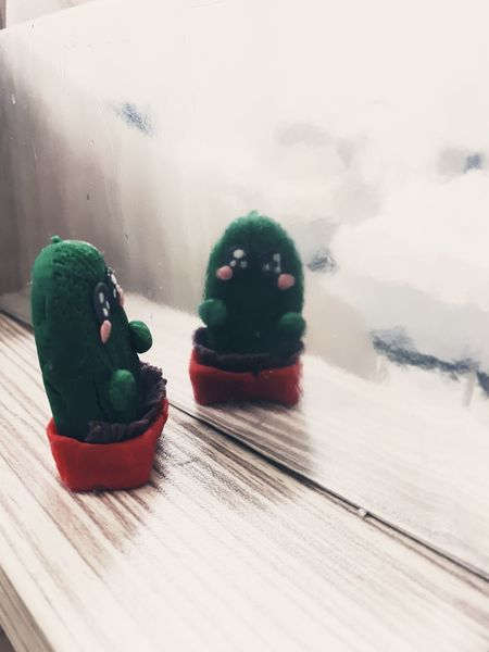 Cactus Cactus Flower Cactus Collection Clay Clay Work Clay Dolls Reflection Indoors  No People Day