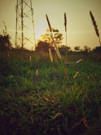 Growth Nature Field Plant Close-up Outdoors No People Tranquility Sunset Beauty In Nature Scenics Grass Sky Day Photo Kolkata IPhone (null)HDR 4K Wallpaper Photo Of The Day Photography Nature Flowerpower Miles Away EyeEmNewHere The City Light Colour Your Horizn