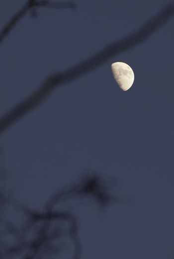 Adventurelands Photography Explorers Connect New Forest National Park Wintertime Astronomy Beauty In Nature Moon Moon Surface Moonlight Nature Night No People Outdoors Planetary Moon Scenics Sky Space Tranquil Scene