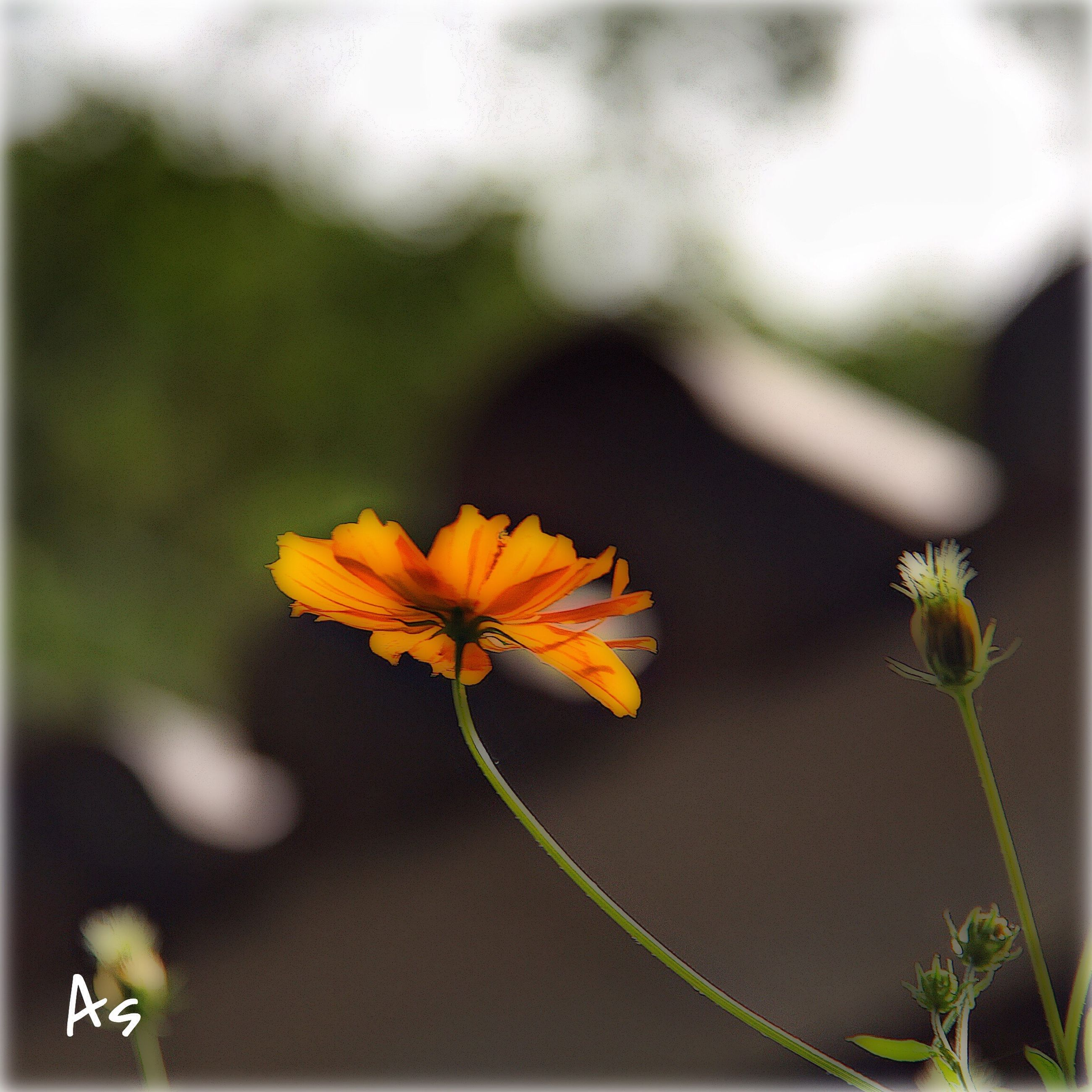 flower, petal, fragility, flower head, focus on foreground, freshness, growth, close-up, beauty in nature, stem, yellow, plant, nature, blooming, orange color, single flower, leaf, in bloom, selective focus, botany