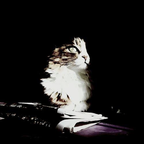 Darkside of the moon... Animals Kyra Cat