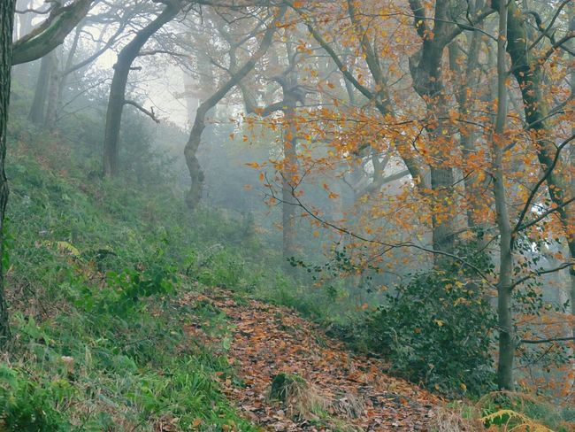 Foggy Morning WoodLand EyeEmbestshots Enchanted Forest Valleys Autumnbeauty Autumn Leaves Foggymornings Tranquil Scene Woodlands Fineartphotography Frosty Days Landscape Fog Beauty In Nature Cold Temperature Winter Is Coming Rural Scene Nature Growth Outdoors No People Scenics River Bank