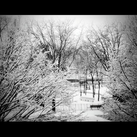 Seasons Tree Bare Tree Winter Nature Cold Temperature No People Outdoors Branch Tranquility Snow Sky Built Structure Tranquil Scene Beauty In Nature Day Architecture Eyemphotography Blackandwhite Photography EyeEm Best Shots - Black + White Cuddleweather Eyeemvision Snow Sports EyeEmNewHere