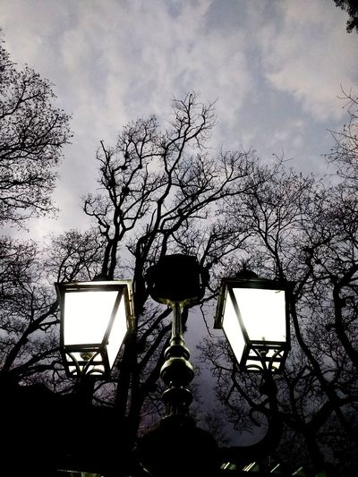 Park Streetlight Evening Tree Silhouette Photography Themes Sky Close-up