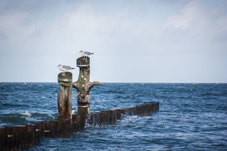 Sea Wooden Post Horizon Over Water Rippled Seagull Sky Plank Day Seascape Perching Waterfront Water Tranquil Scene Wood - Material Calm Tranquility Scenics Pole Post Wooden Ostsee Zingst Zingstagram