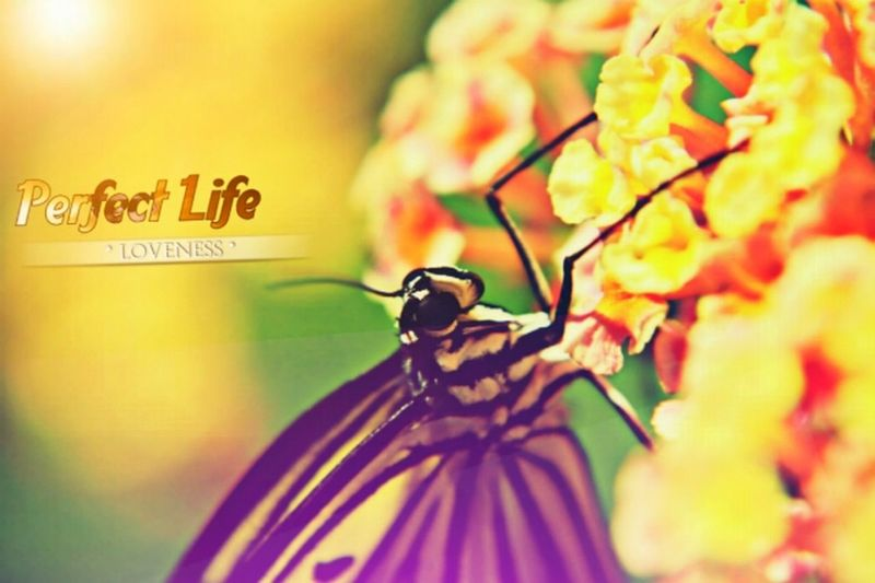 See this guys wonderful butterly Insect Nature Animal Themes Flower Head First Eyeem Photo
