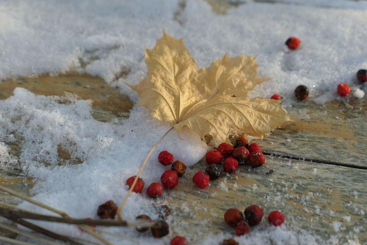 Snow Autumn